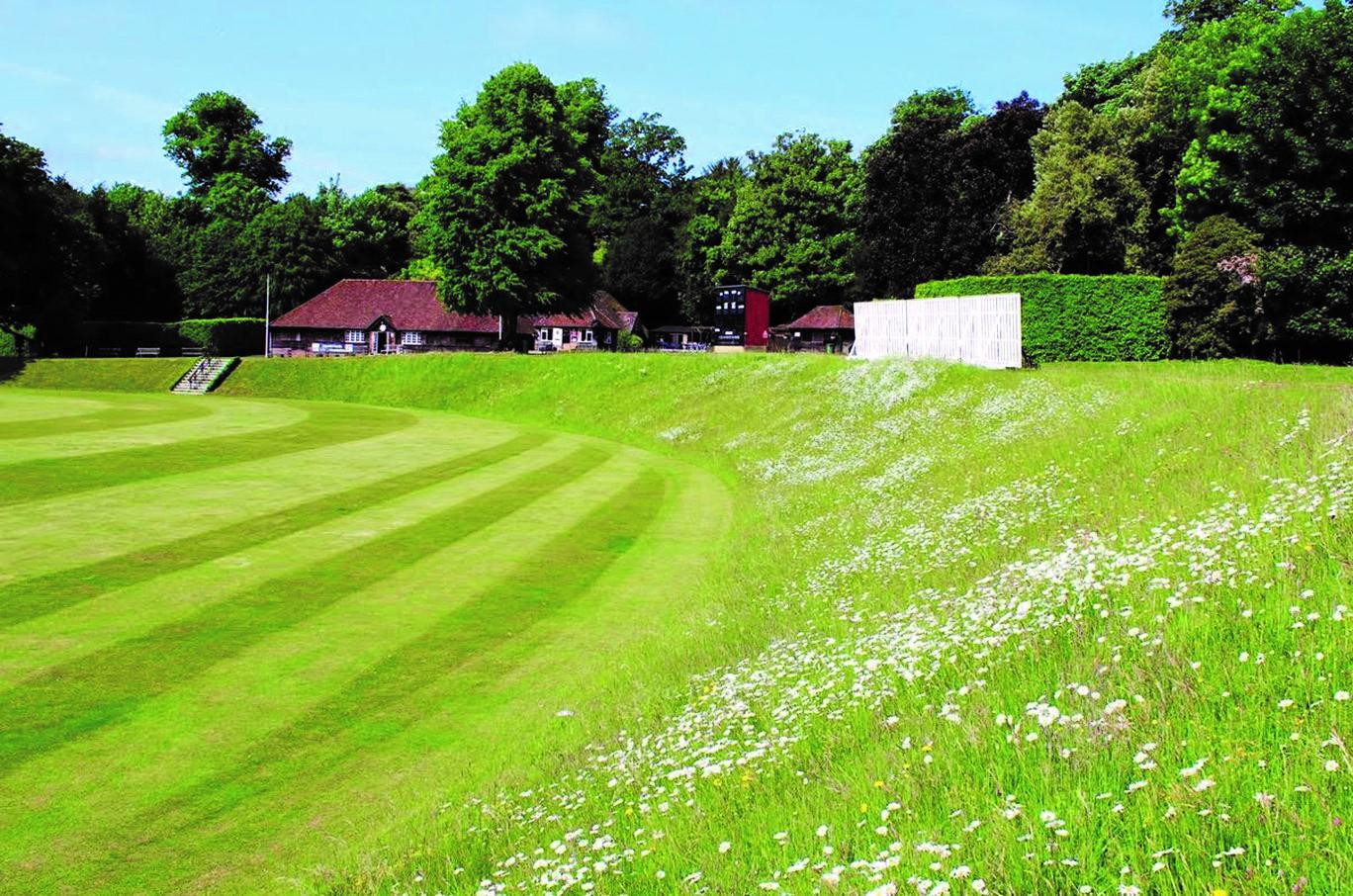 Lush cricket ground photo